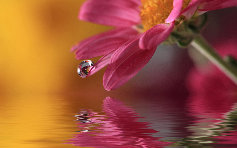 Flower drop macro