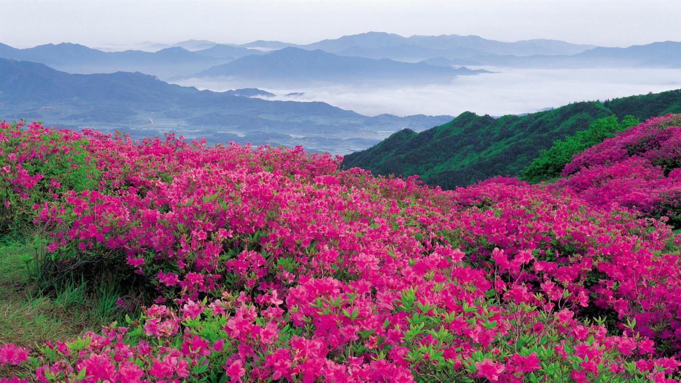 ... Flower Field ...