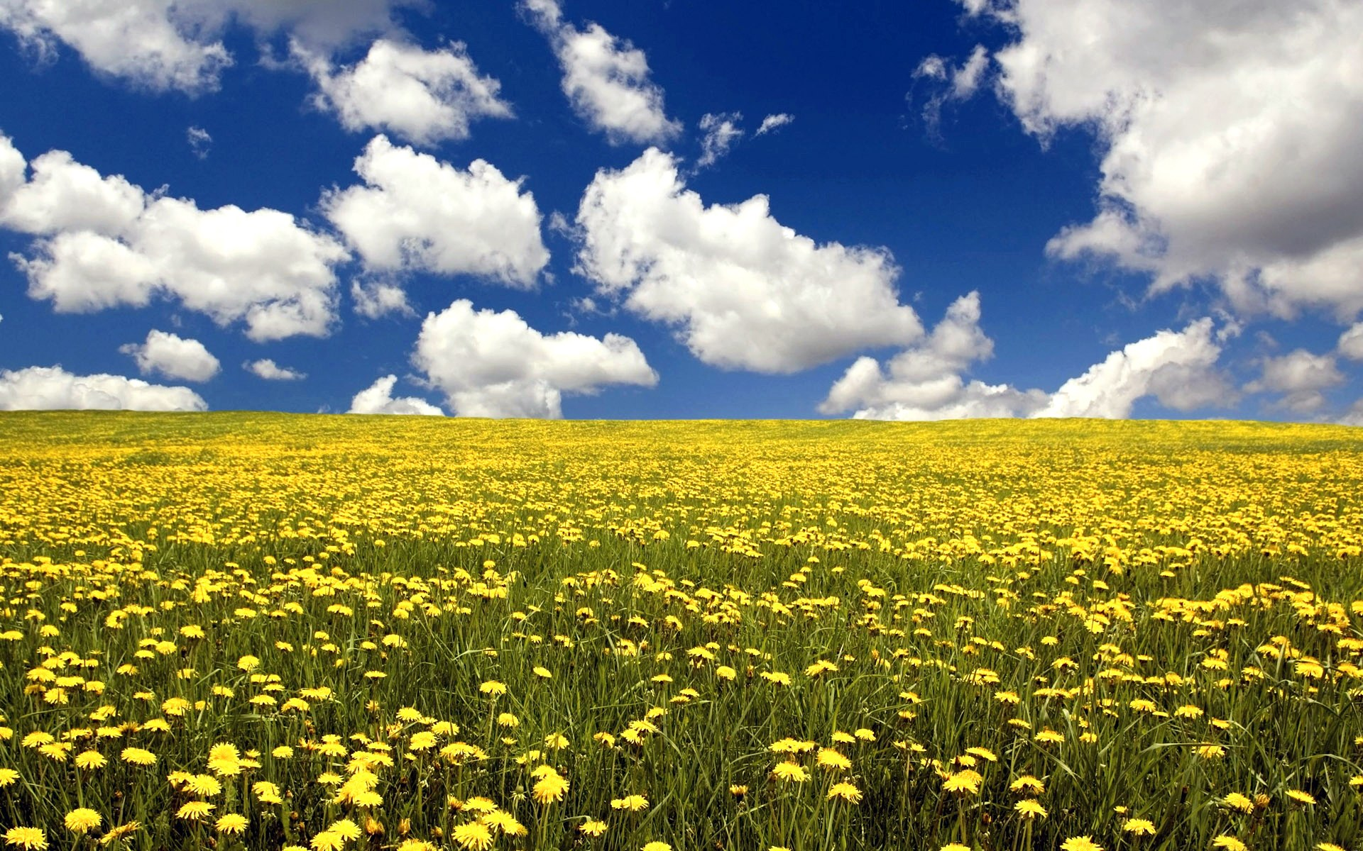 ... Flower Field Wallpaper ...