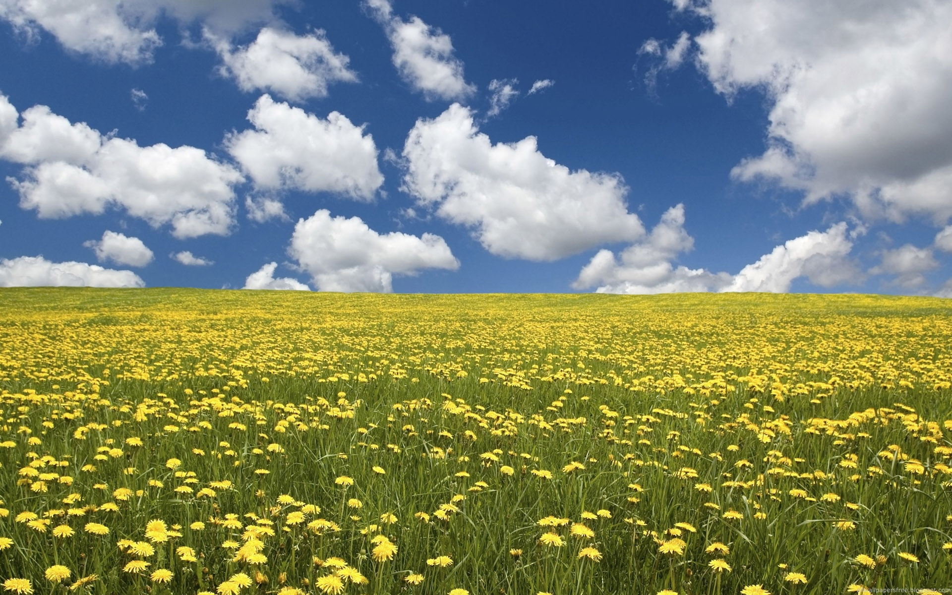 DOWNLOAD WALLPAPER Flowers Field Background - FULL SIZE ...