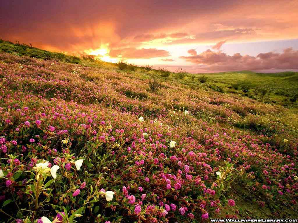 Flower Field Background
