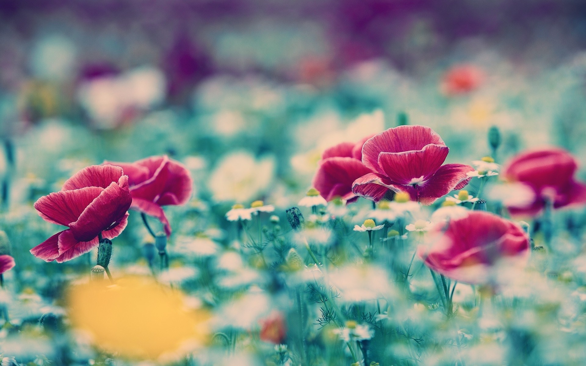 Flower Field Macro Wallpaper