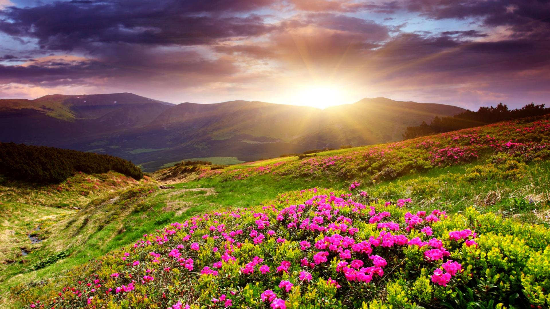 Sunset In Flower Field | 1920 x 1080 | Download | Close