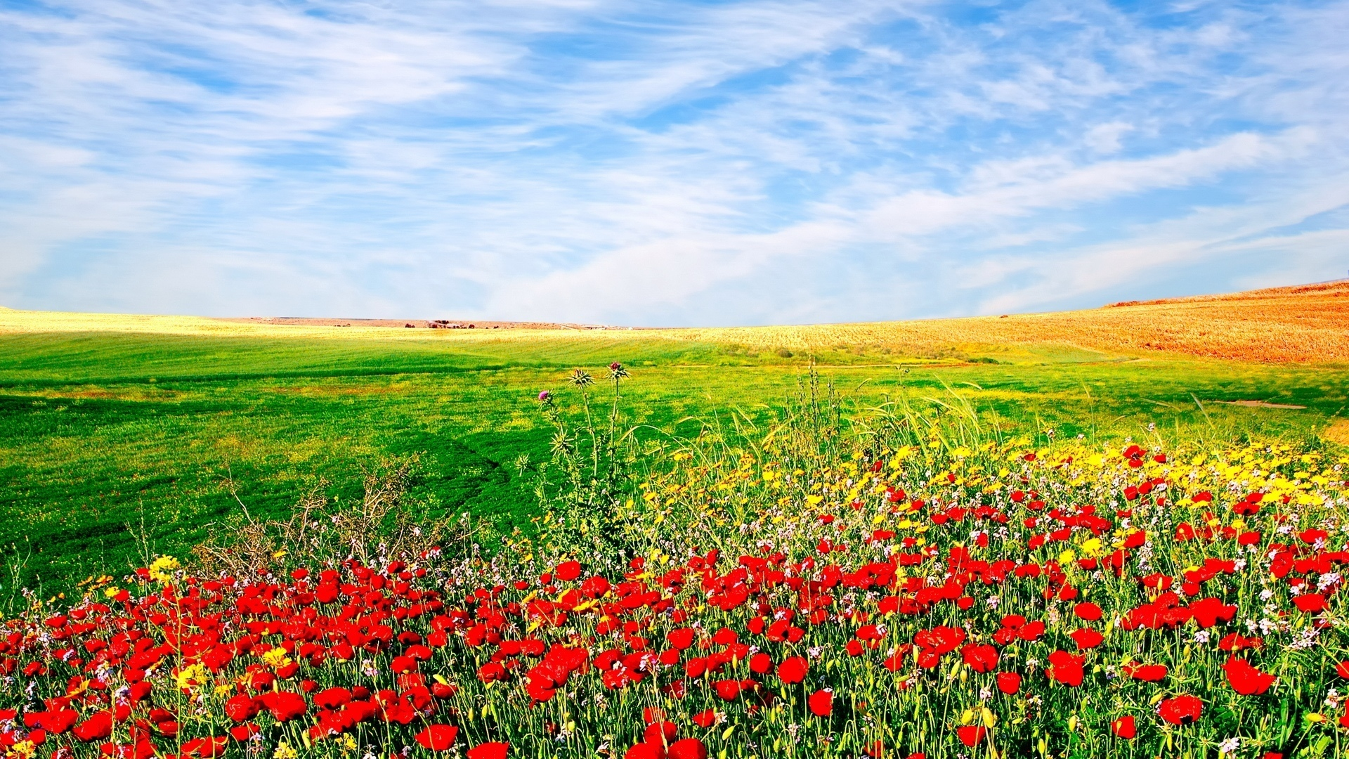 Awesome Flower Field Wallpaper Download Computer