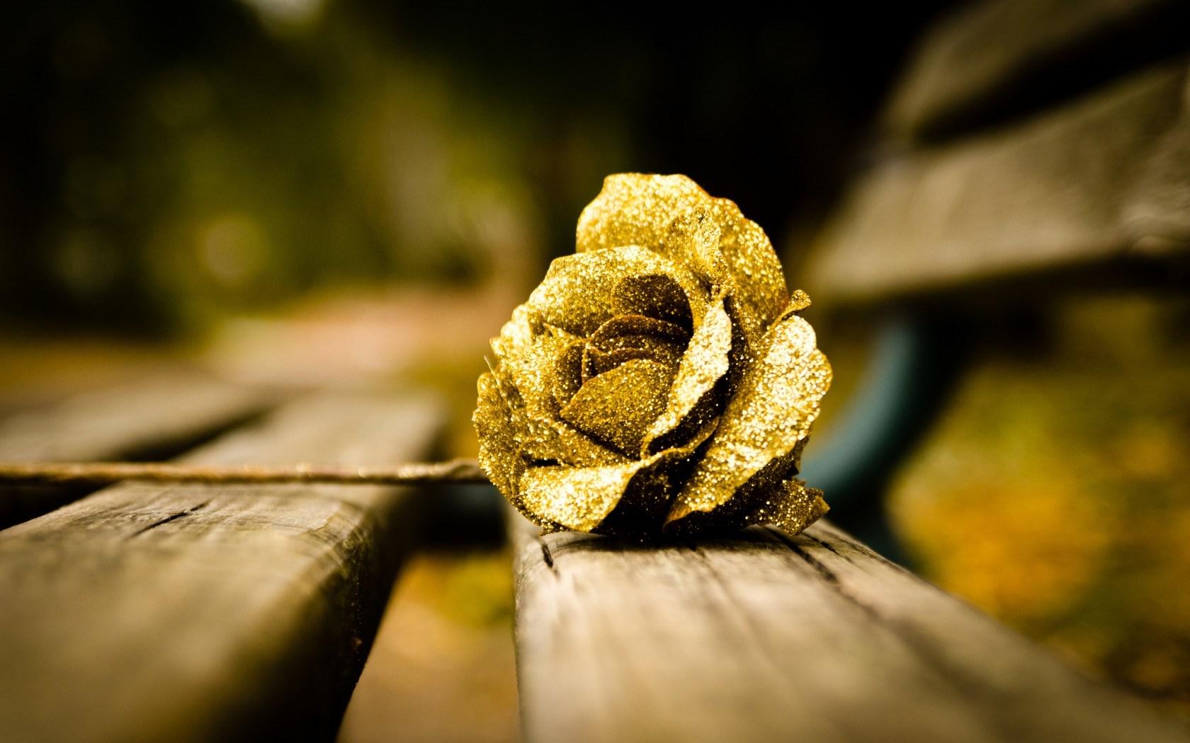 Flower Gold Rose Mood