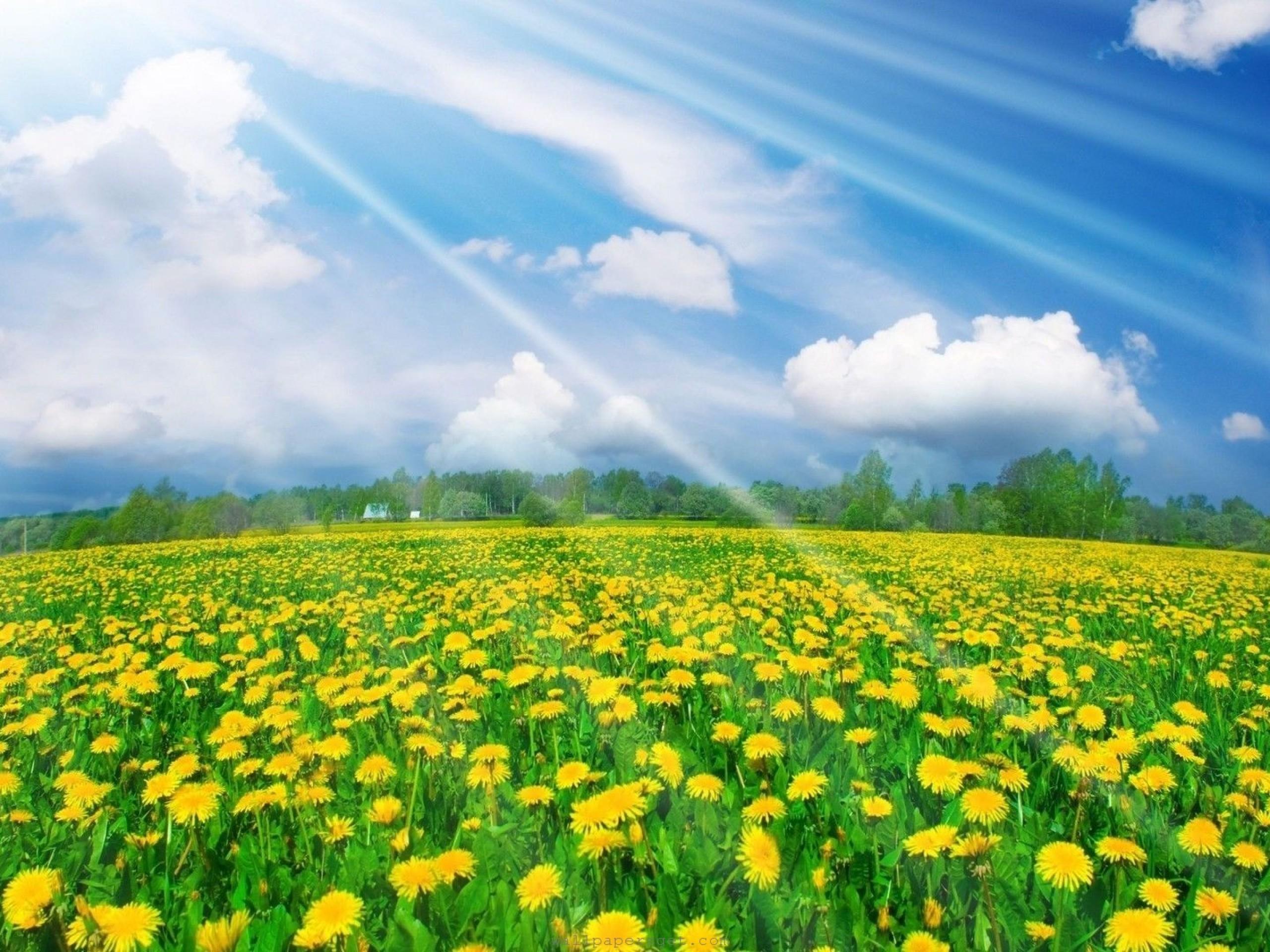 Beautiful Flower Landscape