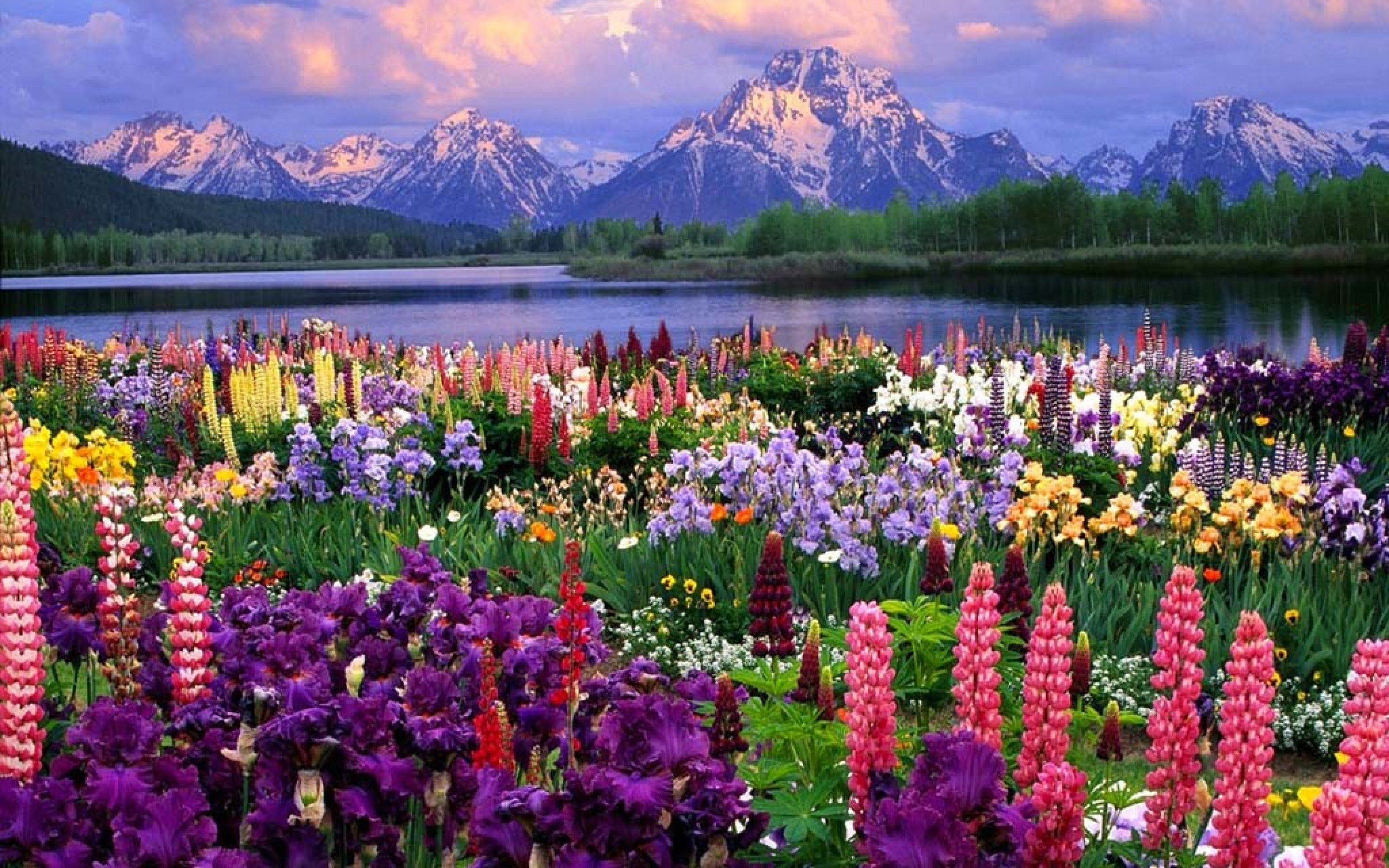 Flower Landscape · Download ...