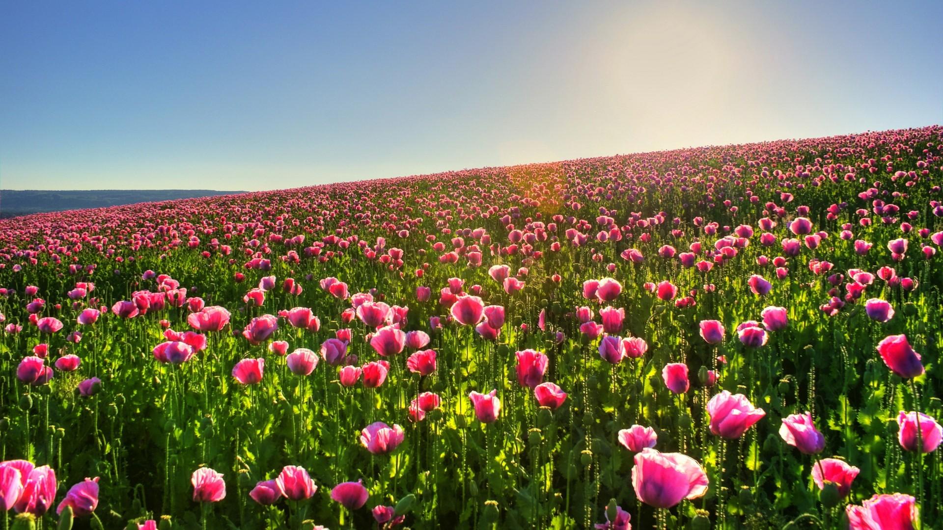 charming flower landscape Part - 5: charming flower landscape amazing ideas