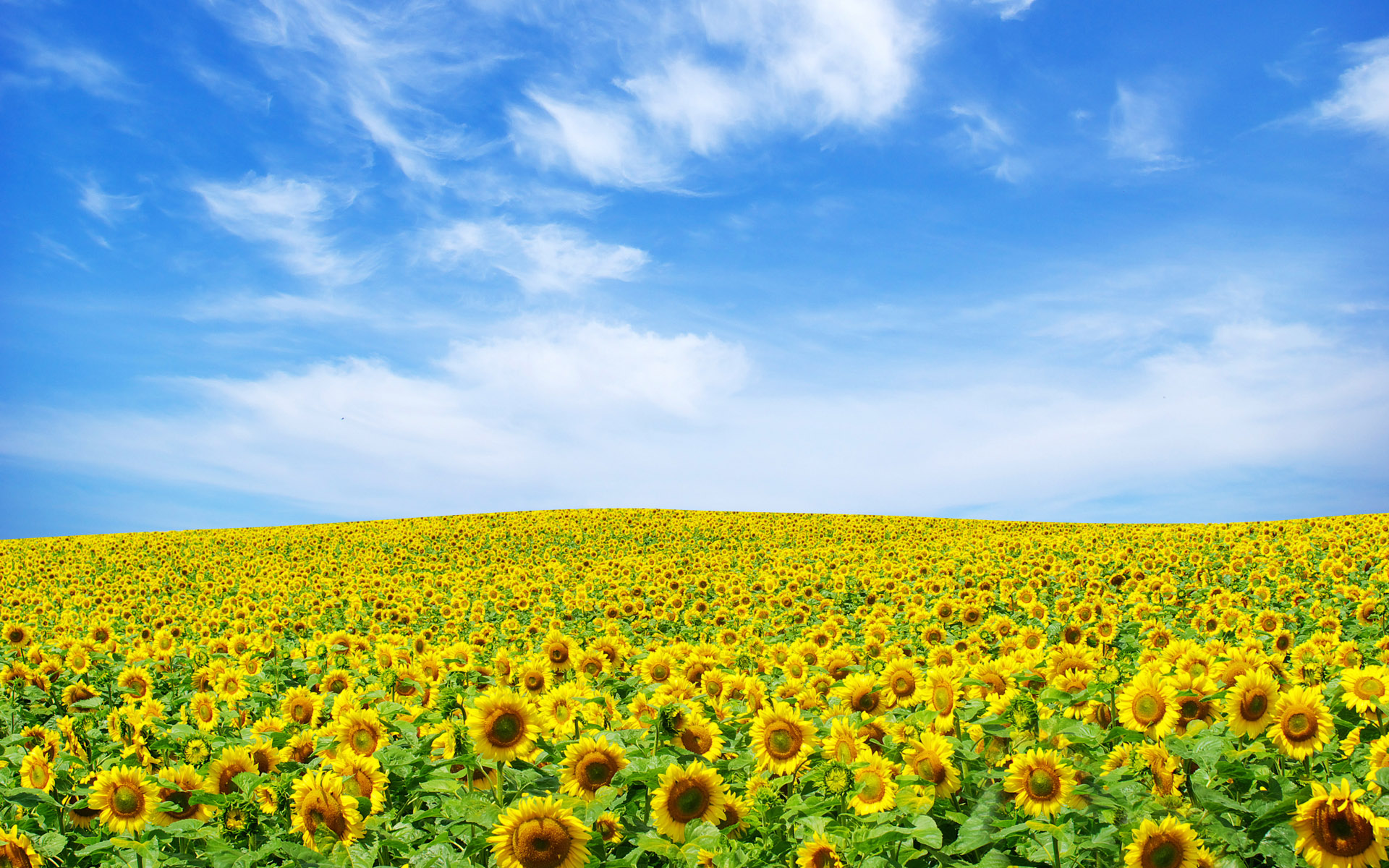 Flower Landscape HD 29016 1920x1080 px