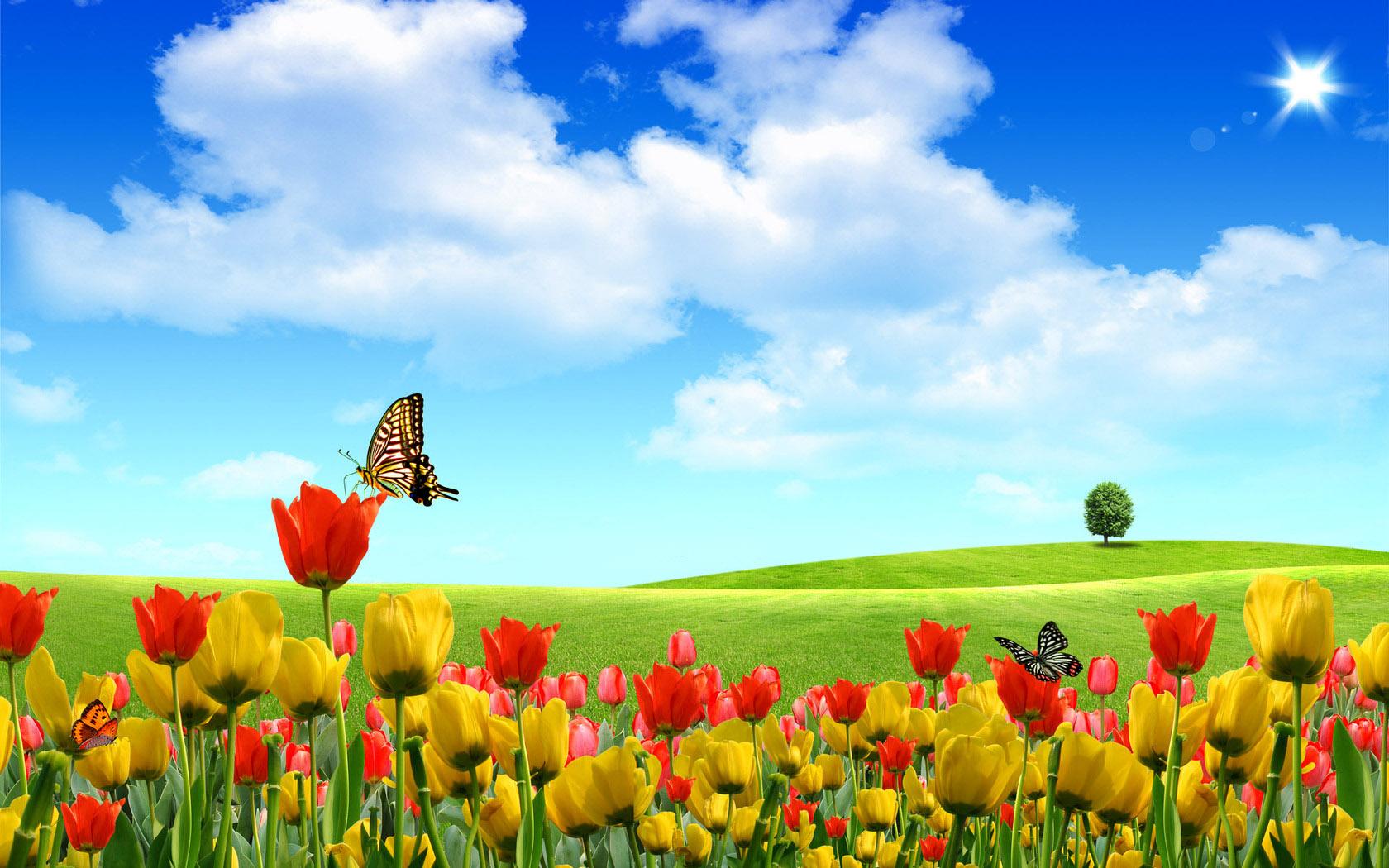 Flower Landscape Wallpaper 1680x1050 78236