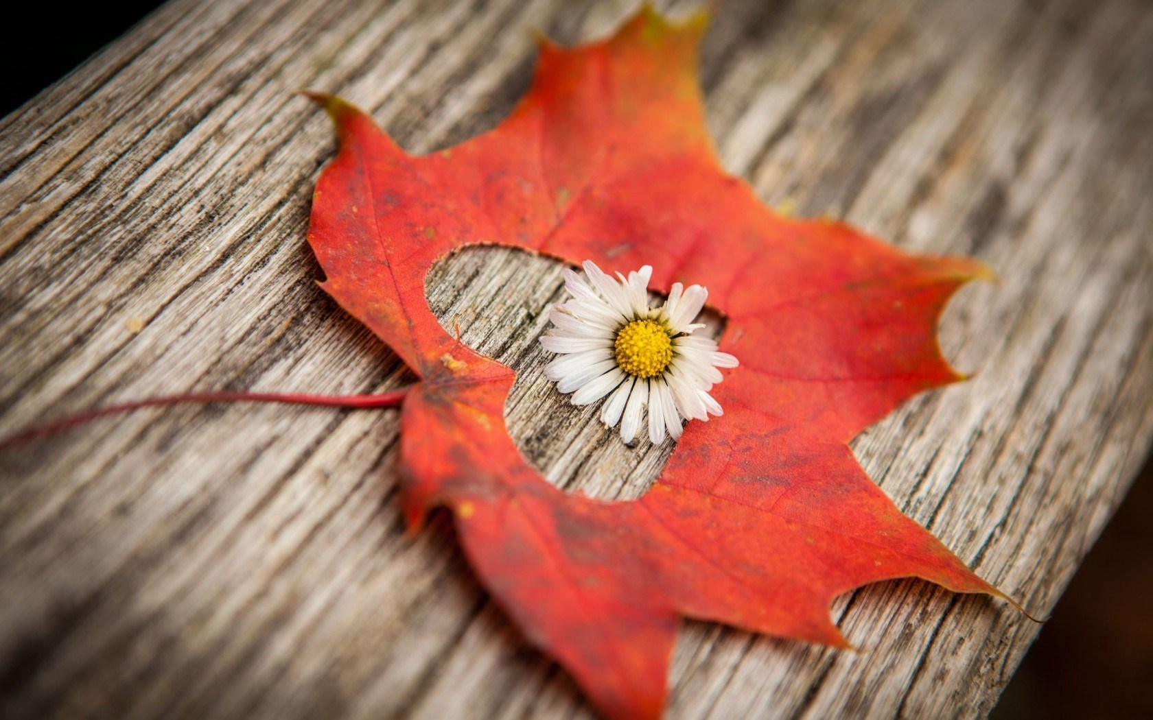 Autumn Flower Leaf Heart Love Mood HD Wallpaper