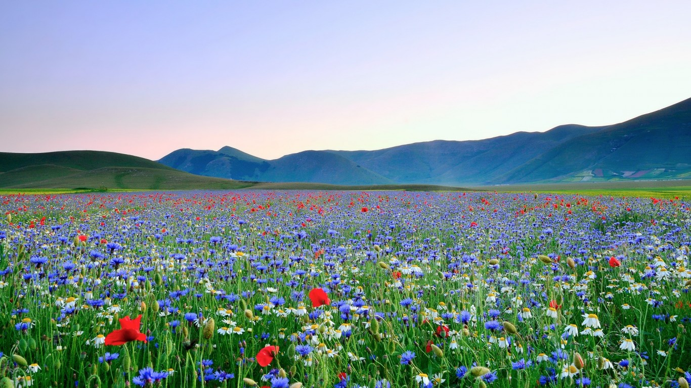 Beautiful Flower Meadow