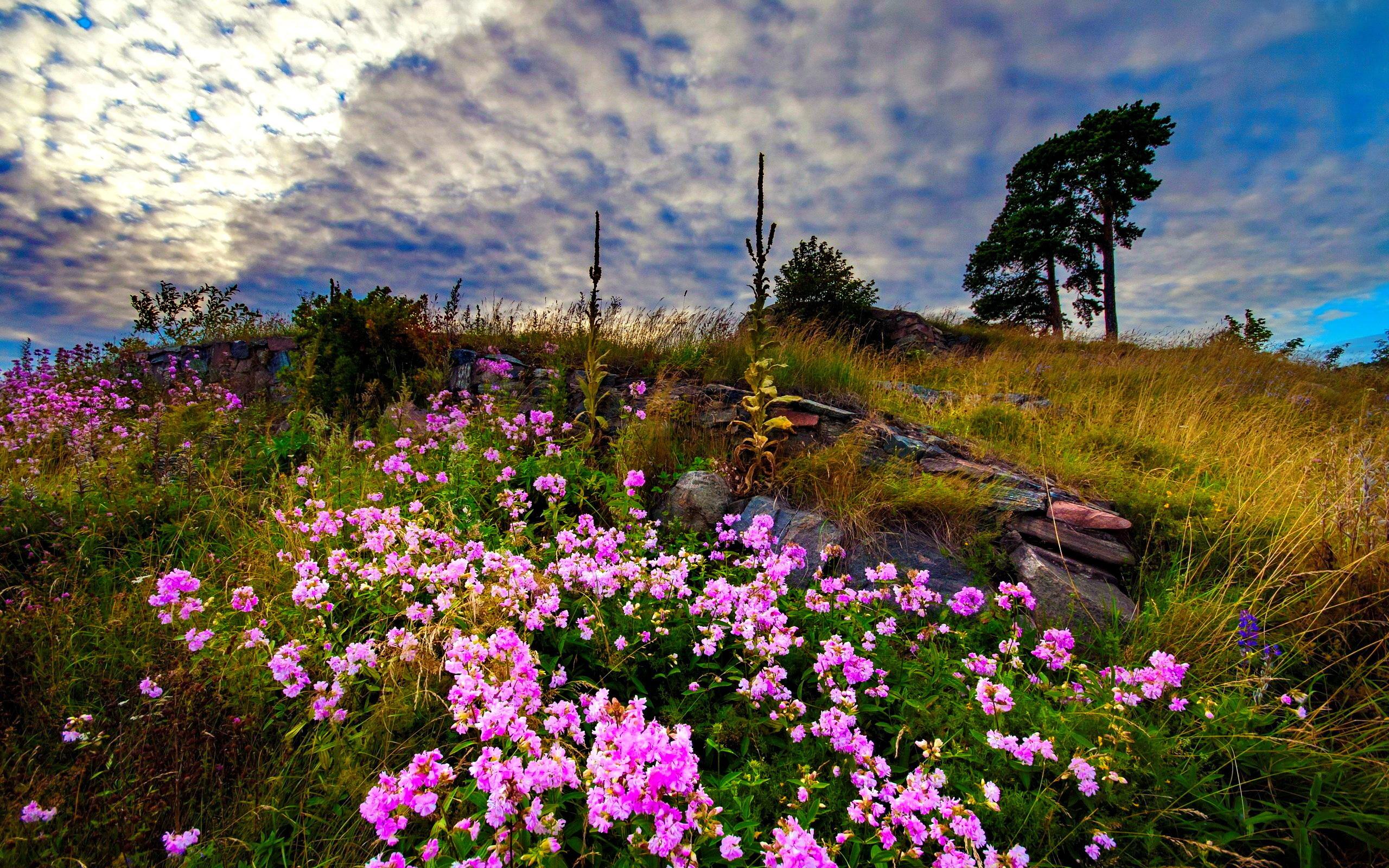Amazing Flower Meadow 20393