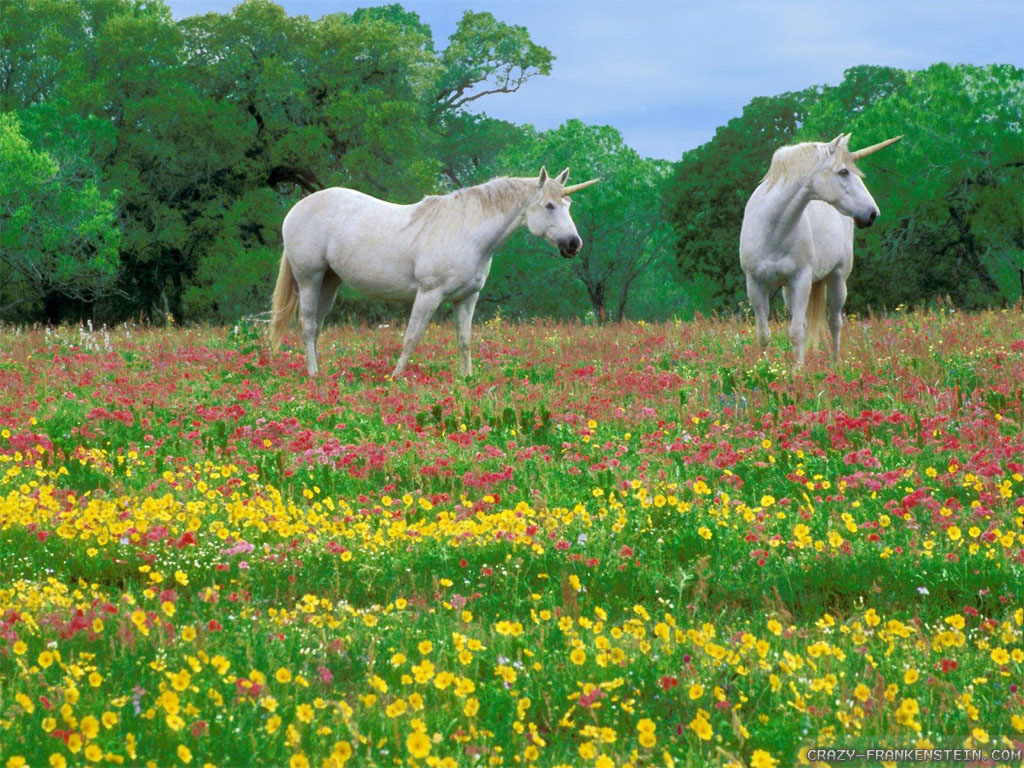 Wallpaper: Unicorns on the flower meadow wallpapers