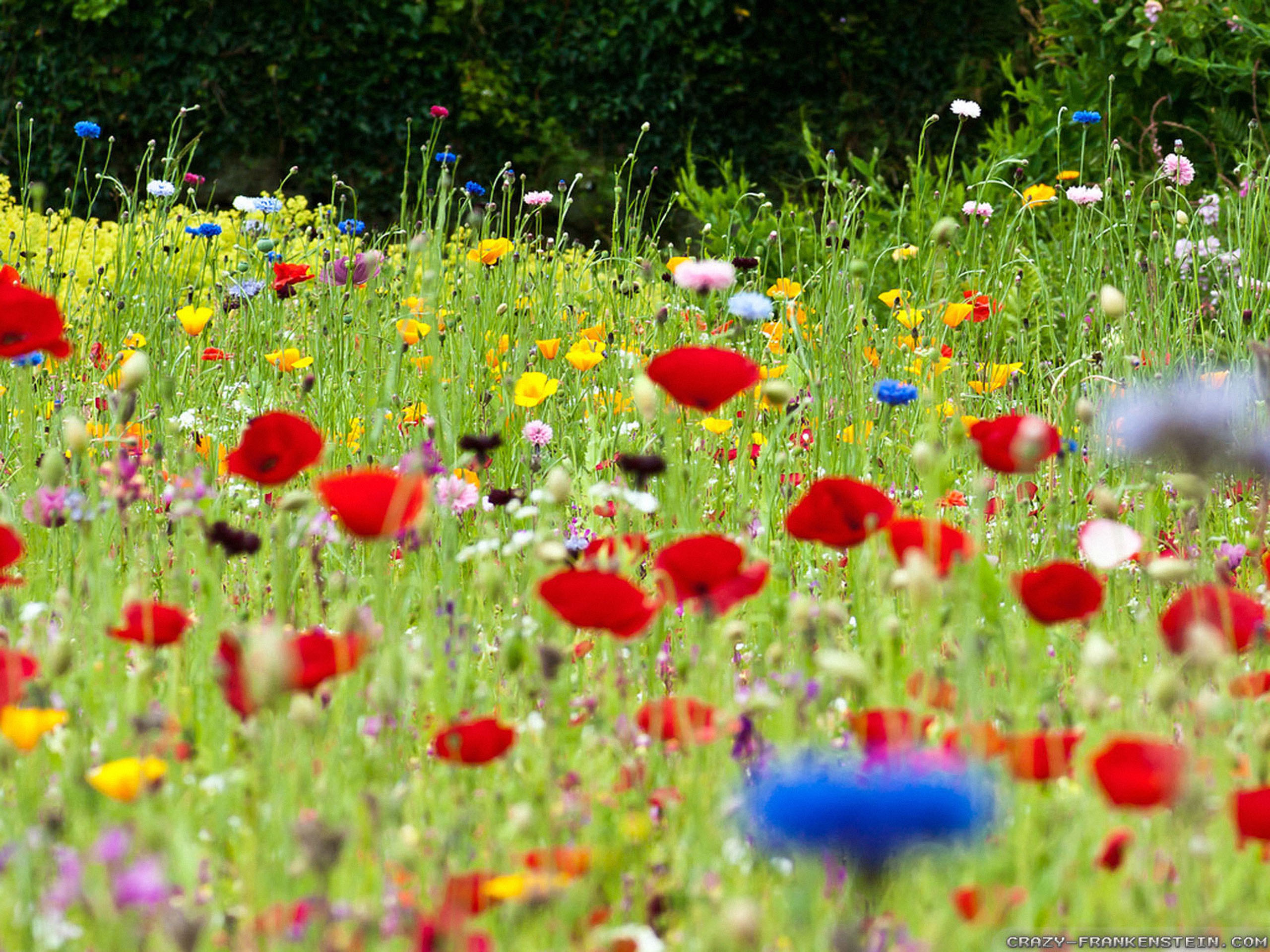 Flowers On Meadow Fields