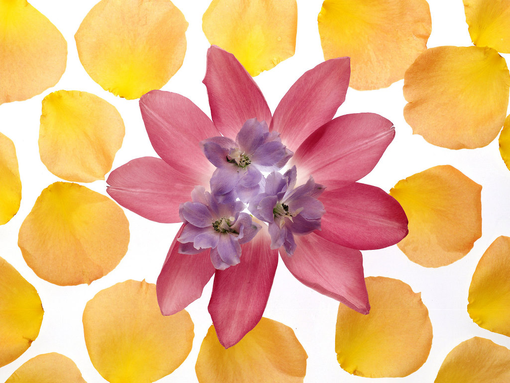HD Wallpapers Flower petal art