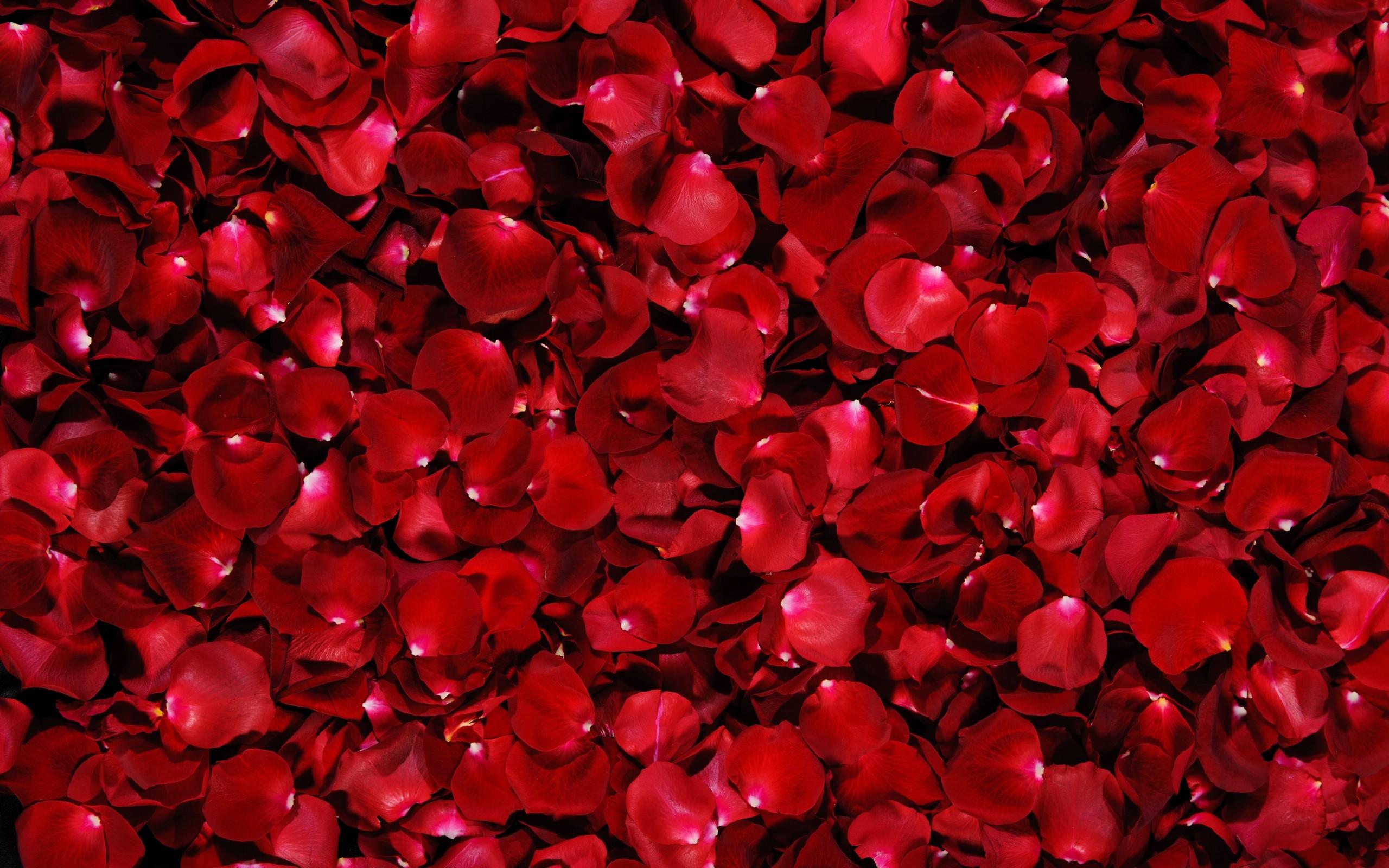 Flower Petal 25885 2880x1800 px