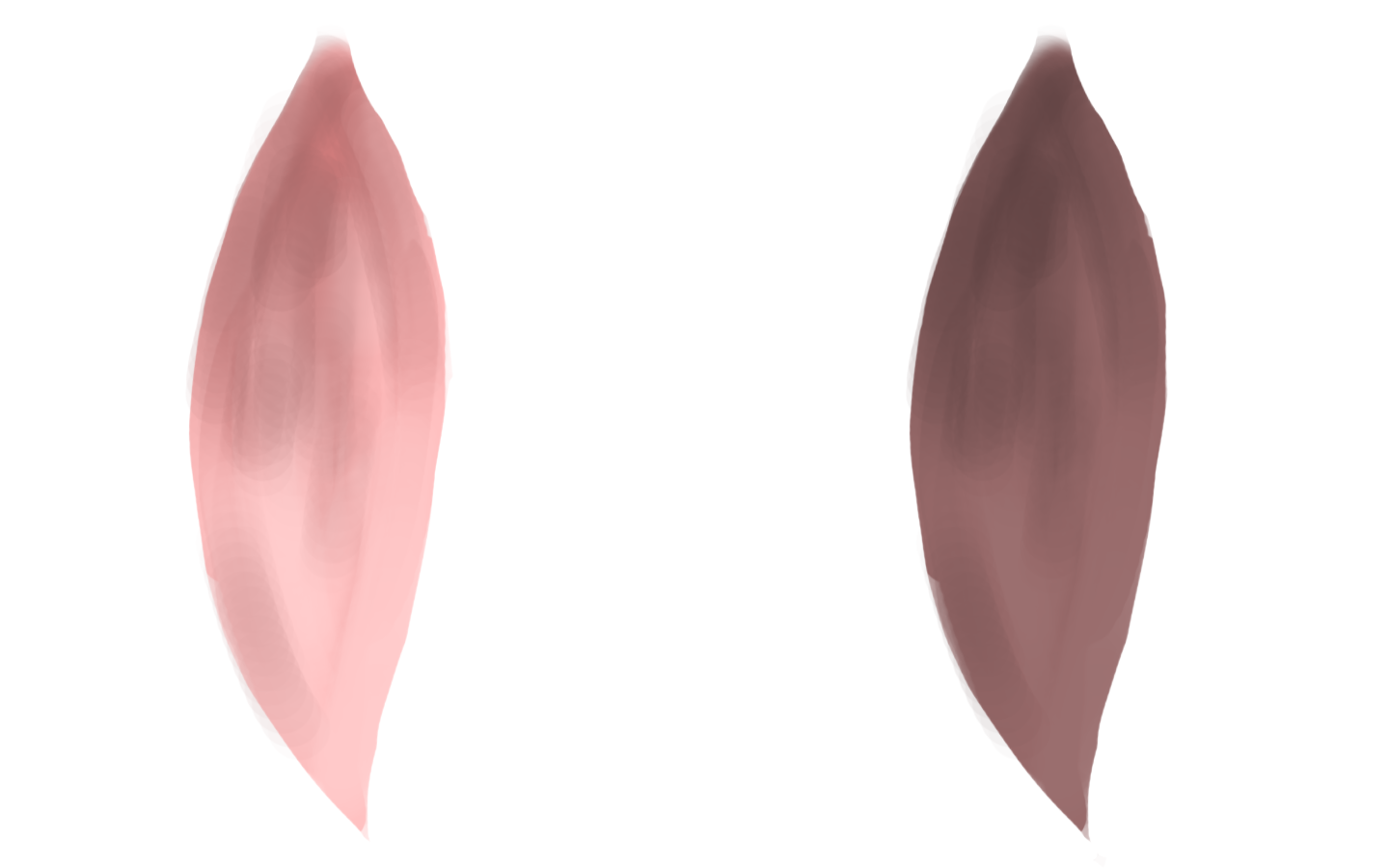 Texture for flower petal particles. Front and back.