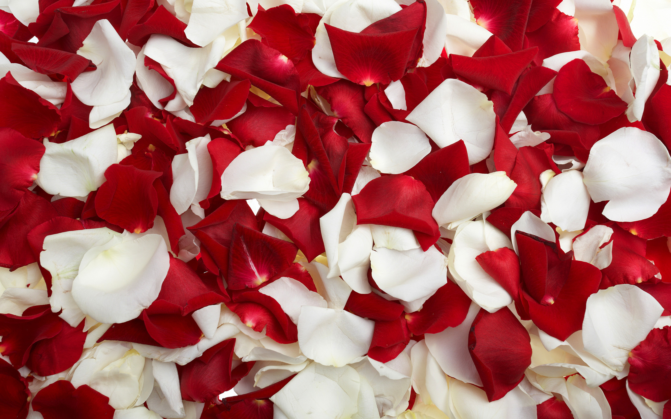 Flower Petal Wallpaper