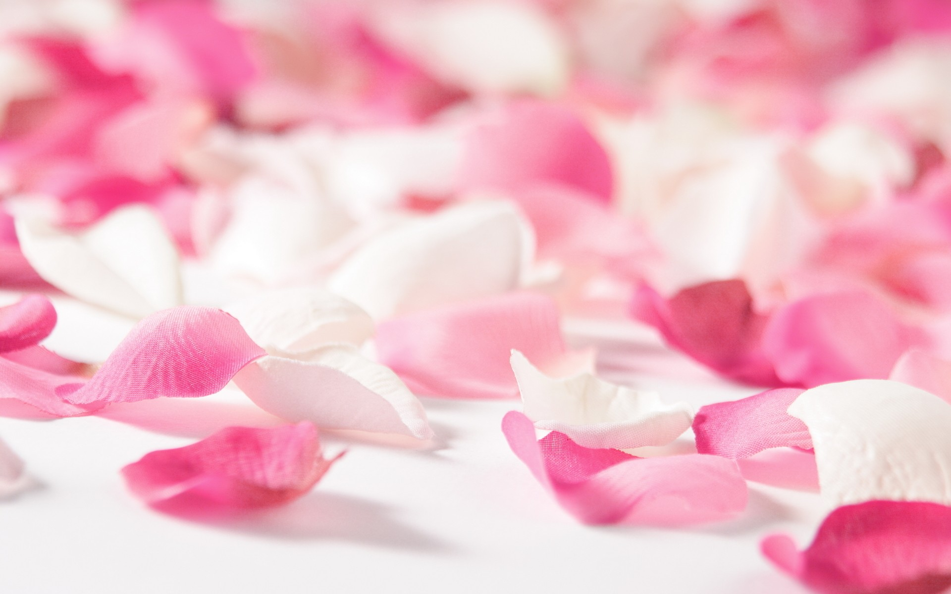 Flower Petals Background