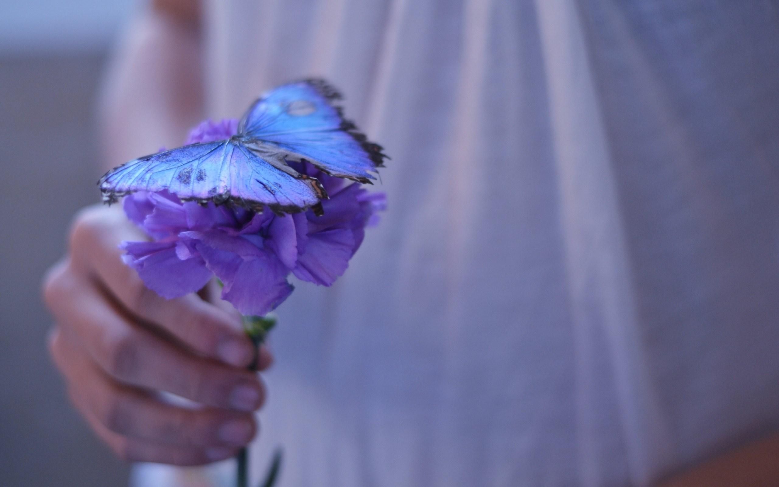 Flower Purple Butterfly Girl Mood