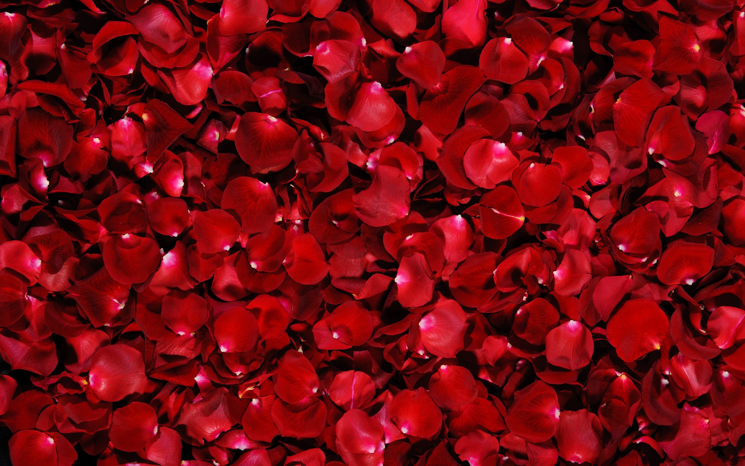 Flower Red Rose Petals