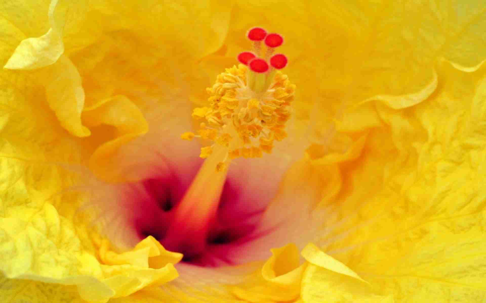 DOWNLOAD: flower-stamens-petals-hd free background 2560 x 1600