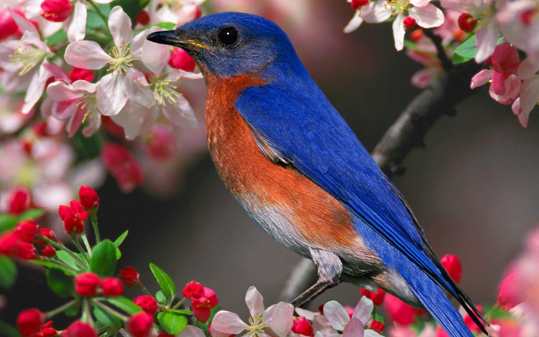 Bluebird-flower Wallpaper