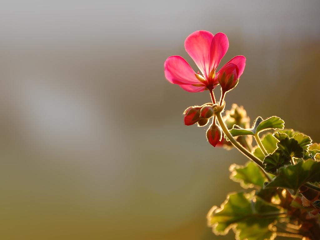 Flower Wallpaper 10 Thumb
