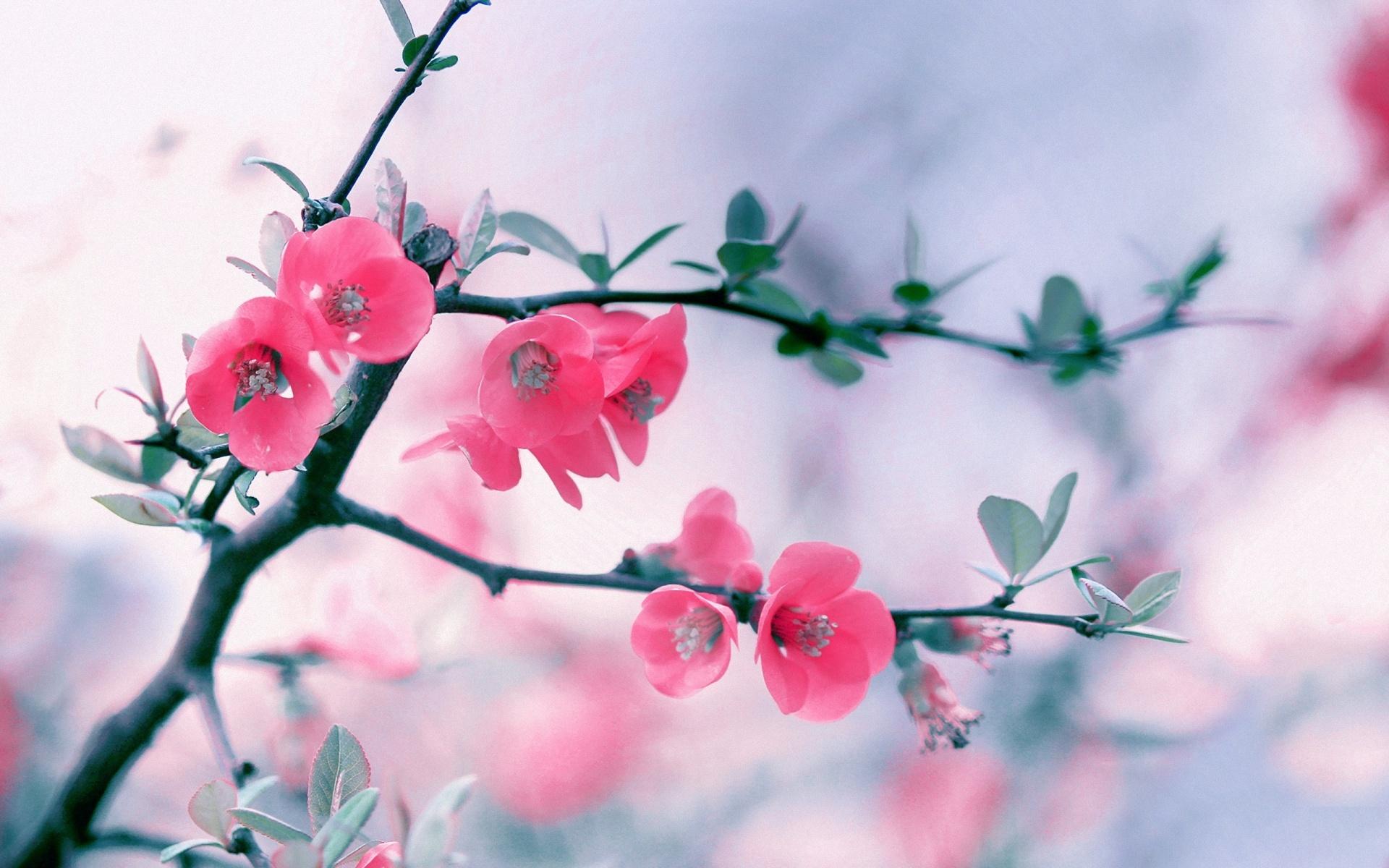 Flower Tumblr wallpaper