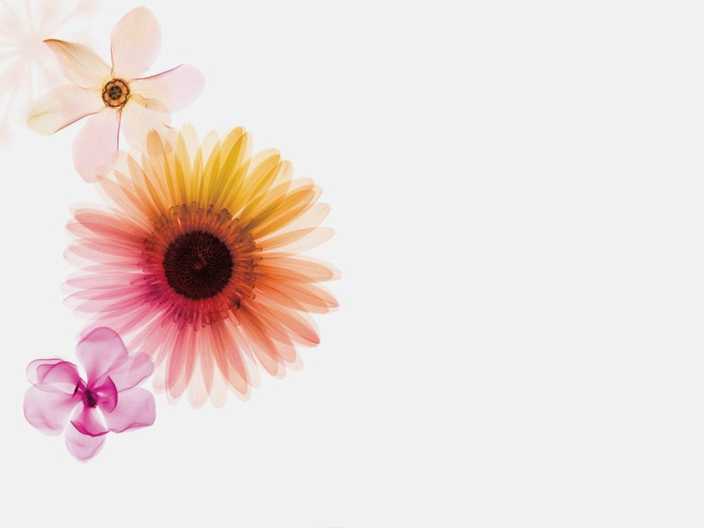 Flower Wallpaper 604 HD Background
