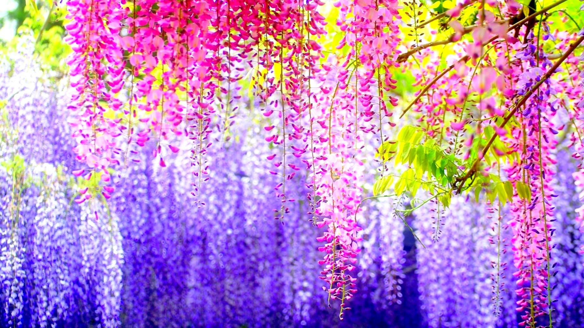 Flower Wallpaper 301 Free Desktop