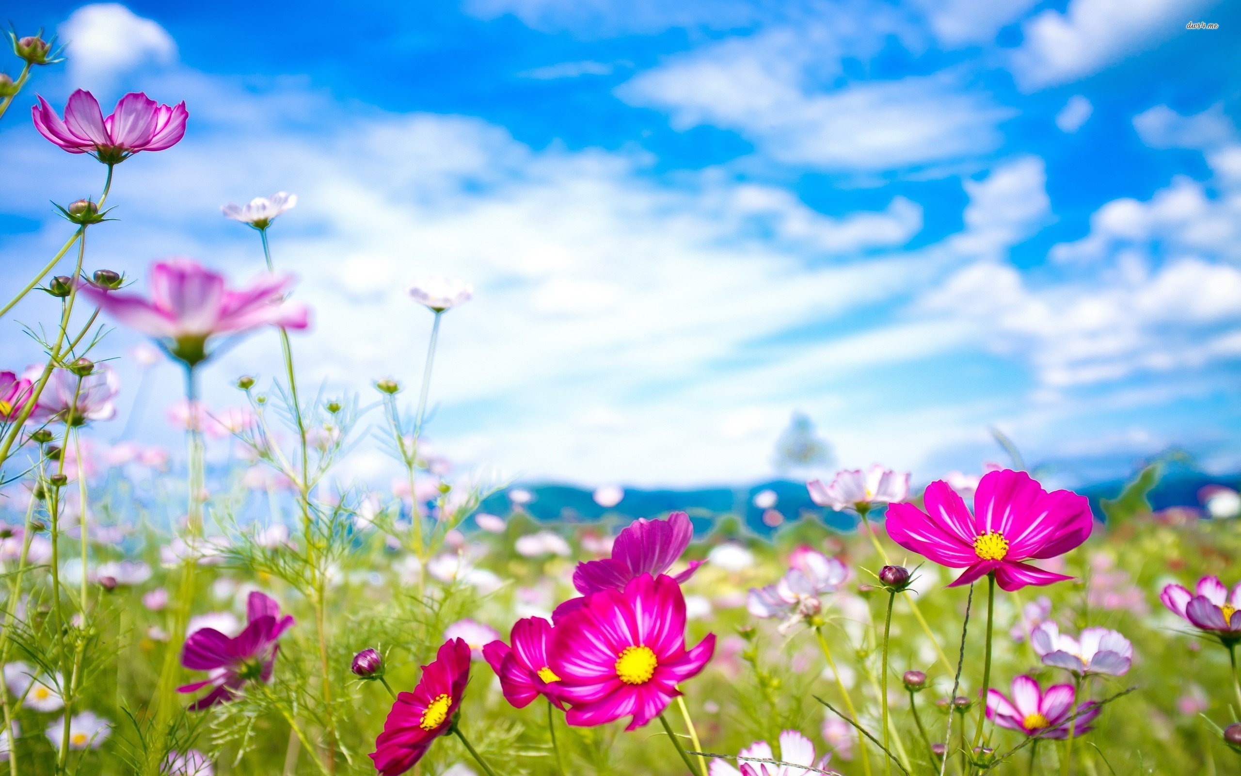 Flower Wallpaper 557 Best Widescreen