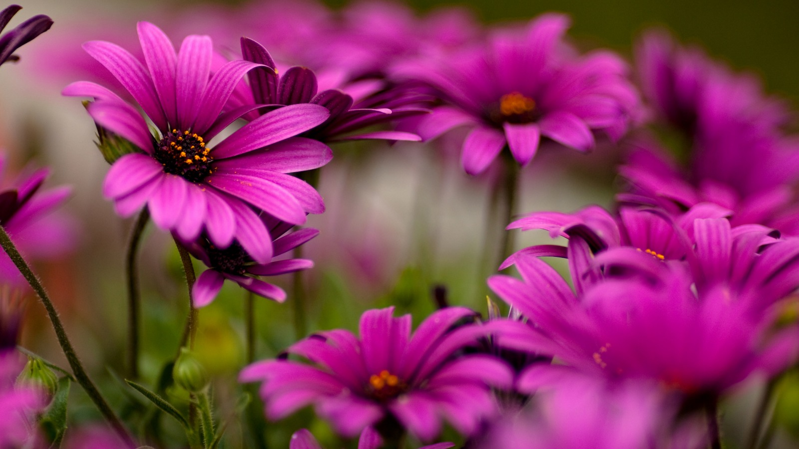 Flower Wallpaper For PC