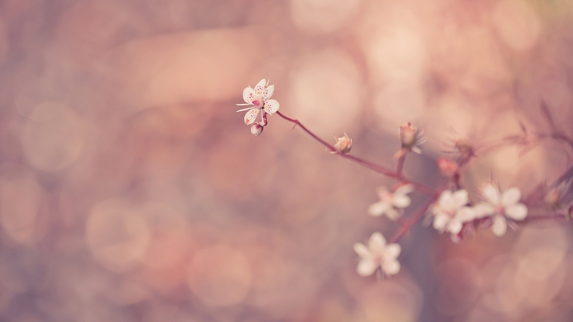 flower wallpaper tumblr 13