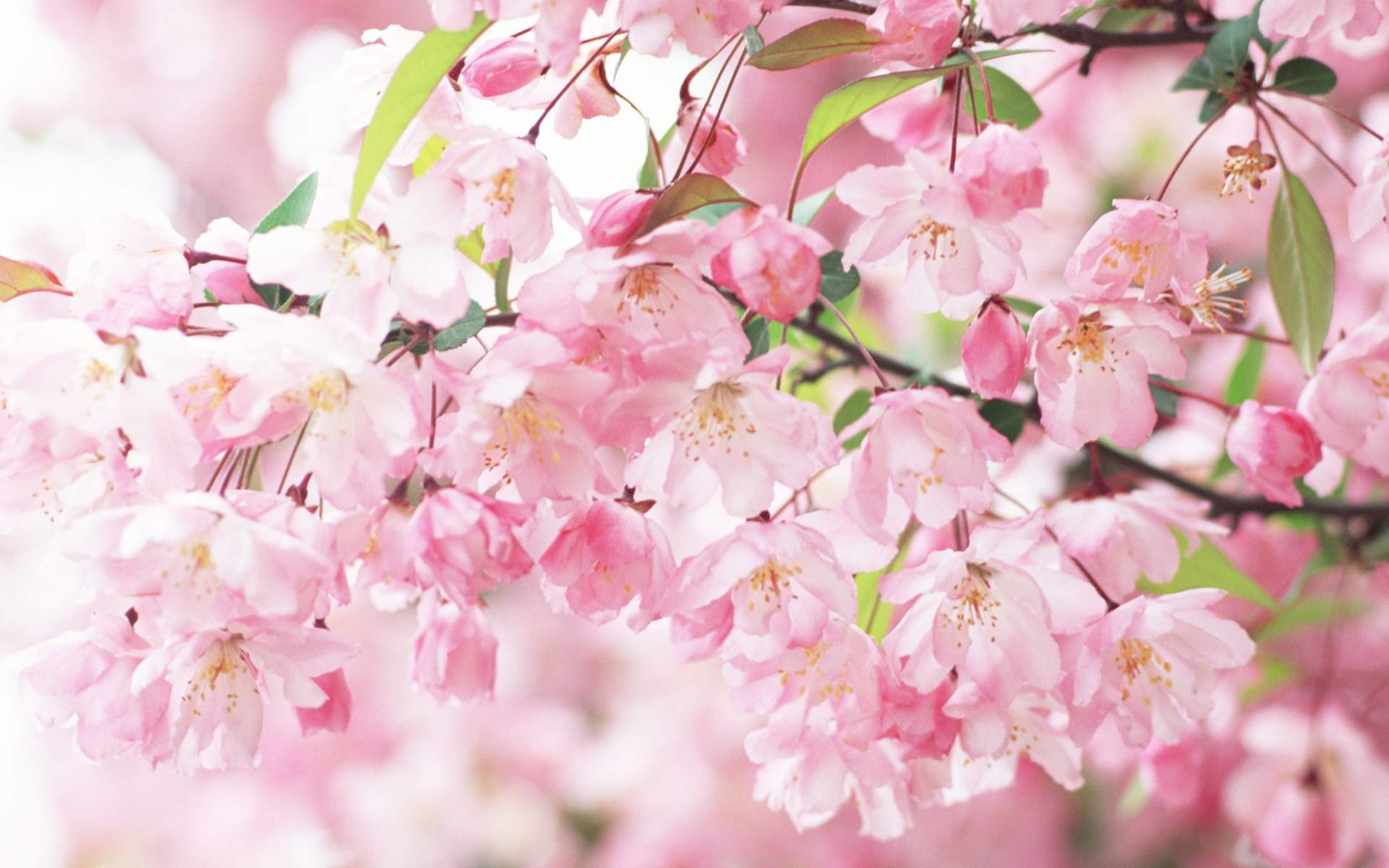 Pink Flowers Tumblr Hd Images 3 HD Wallpapers
