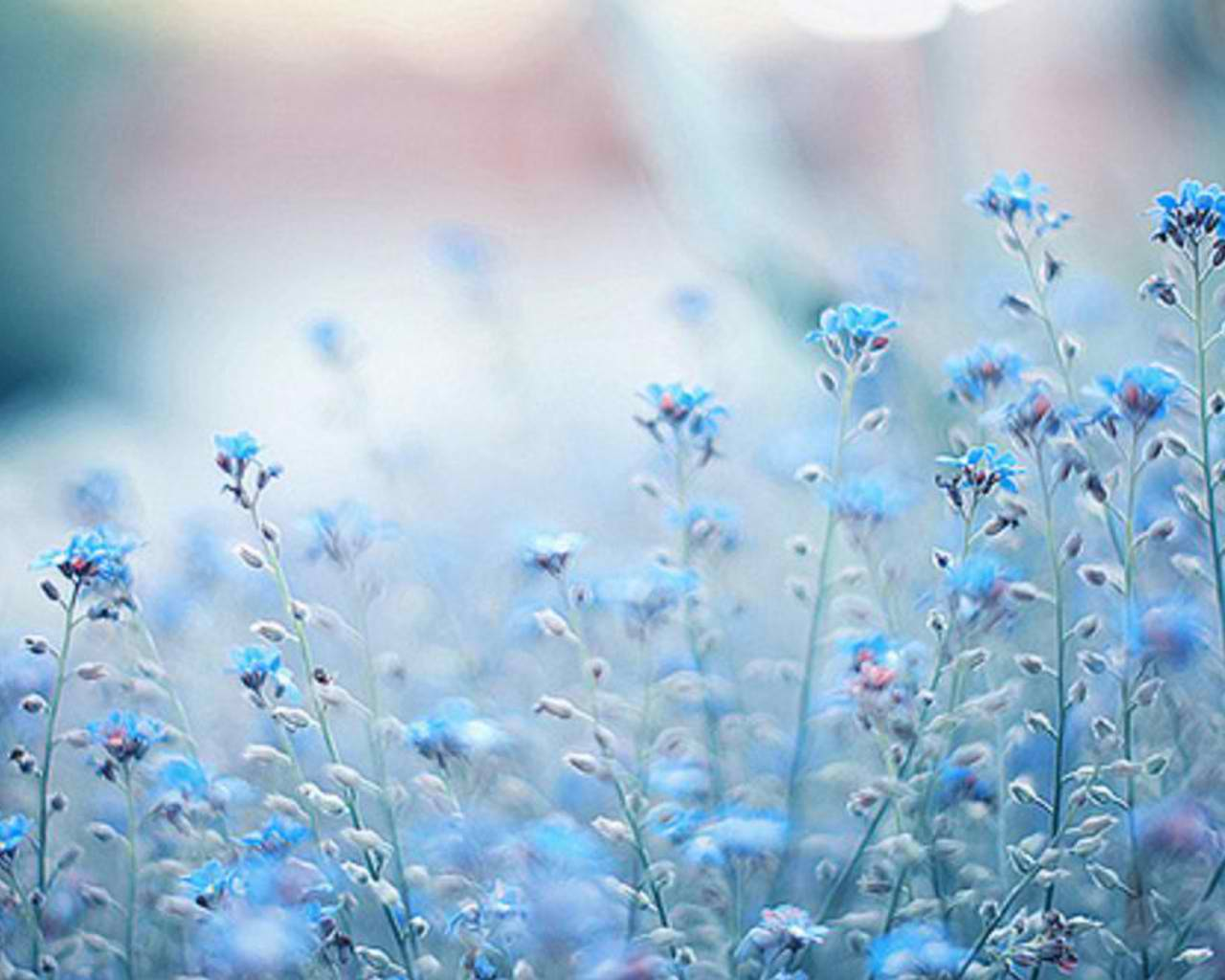 Image size this wallpaper is 1280x1024. This image posted at . You can download wallapper blue flower photography tumblr 1280×1024 for free here by click on ...