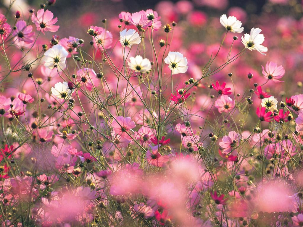 Flower Tumblr Wallpaper 1024x768 42445