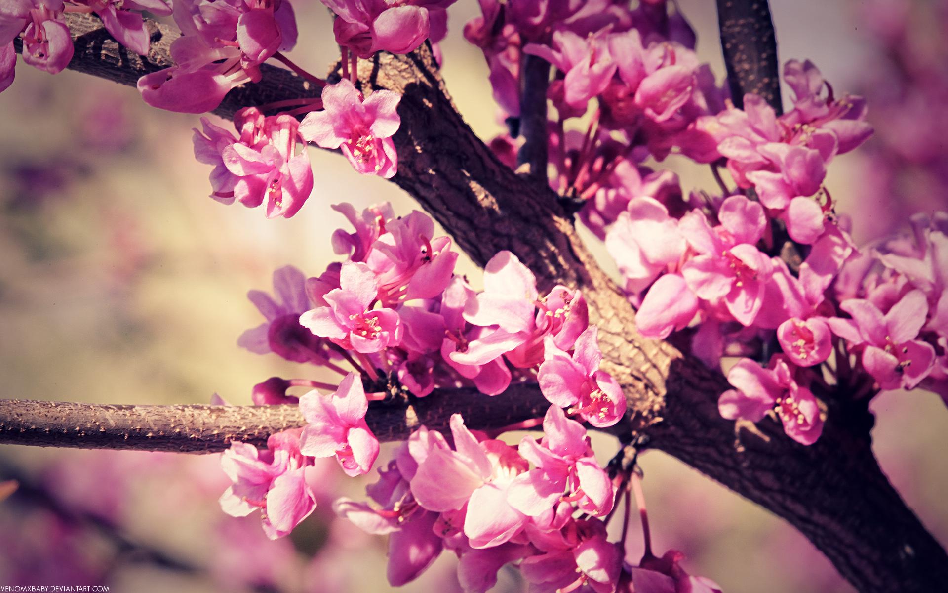 Flower Tumblr Wallpaper 1920x1200 42458