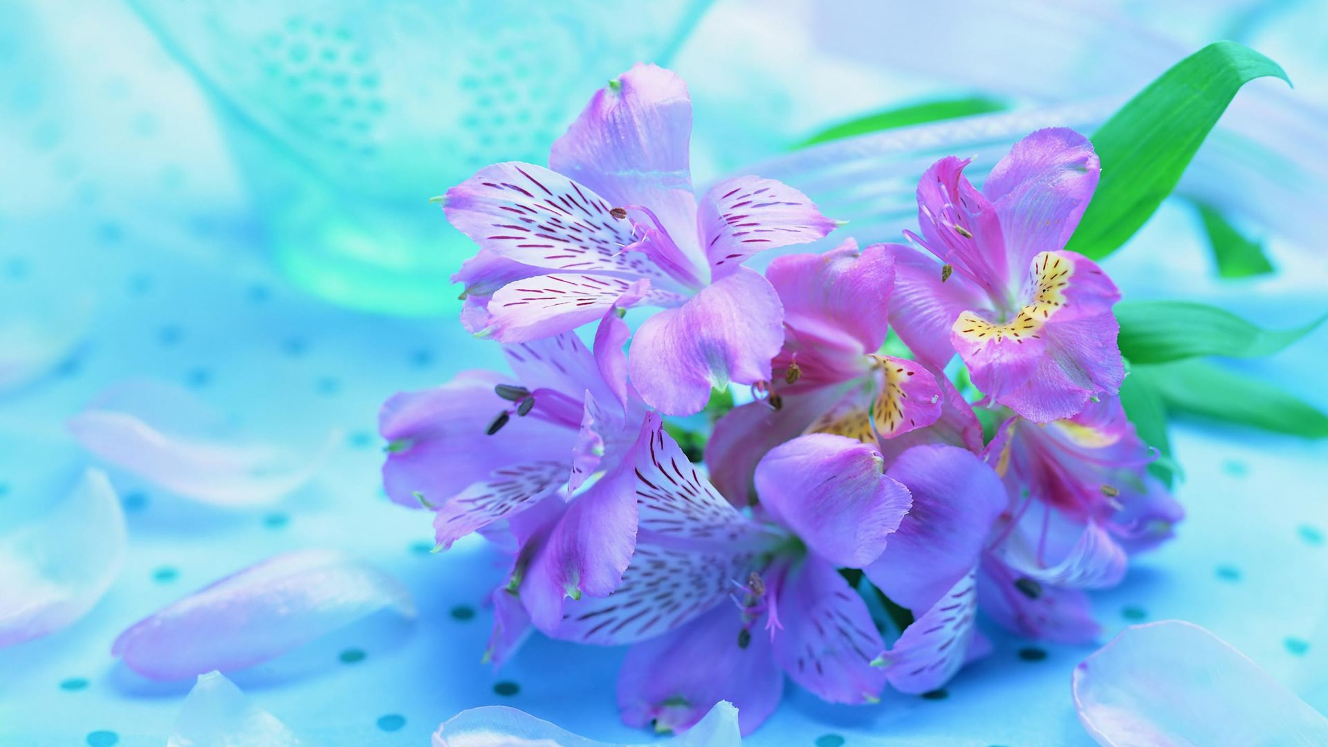 freesia-flower-wallpaper-1920x1080-1076 (Flower Wallpapers in 1920×1080