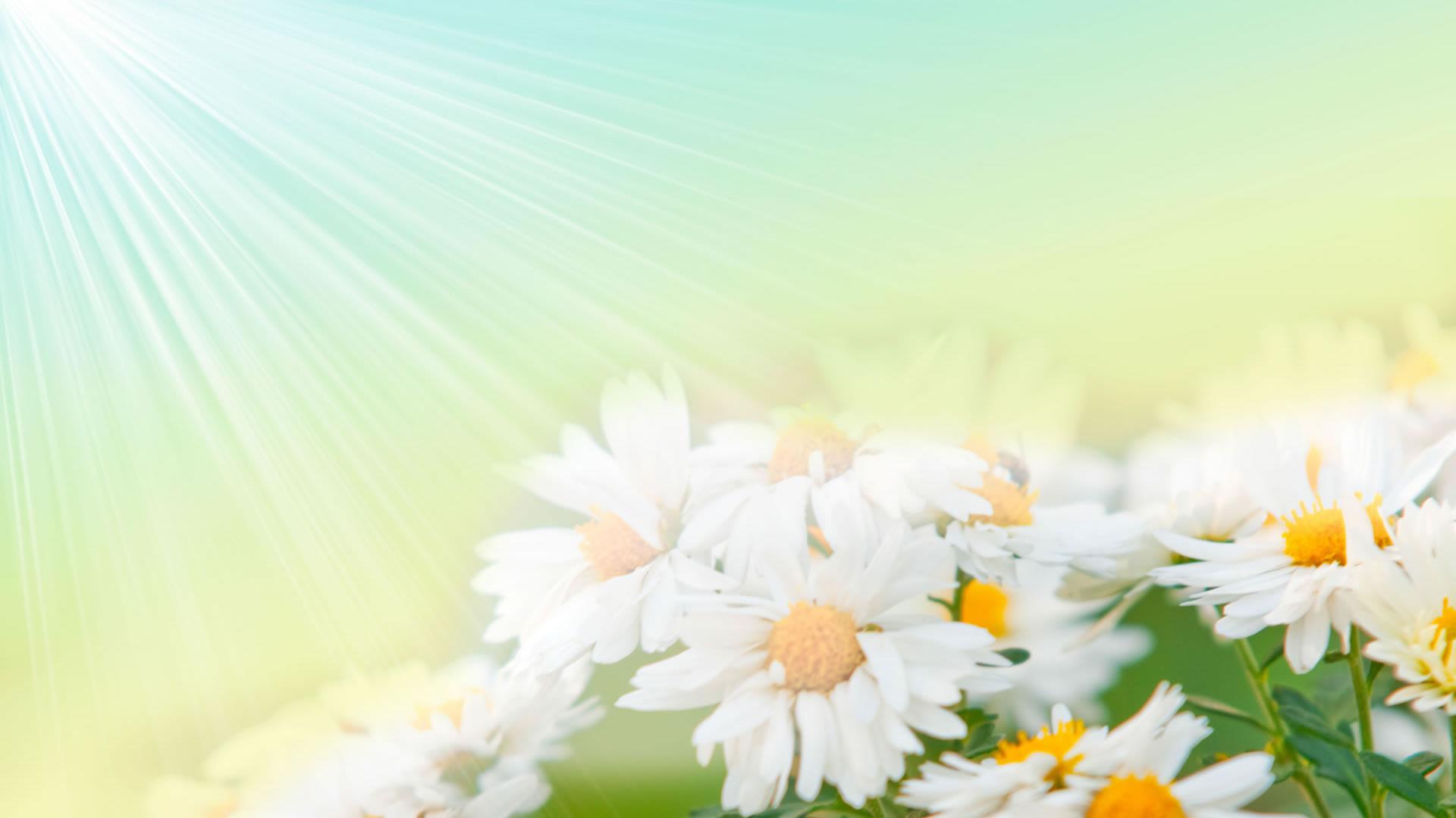 Flower Wallpaper 11