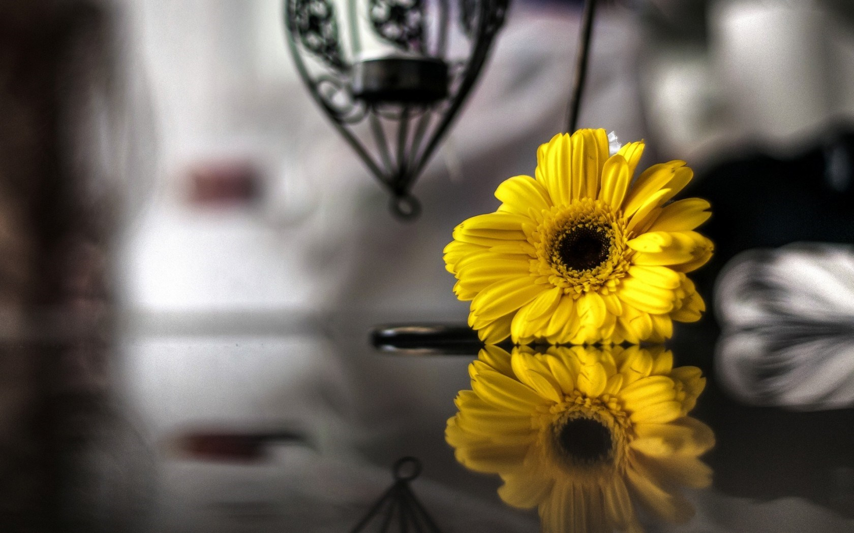 Flower Yellow Reflection