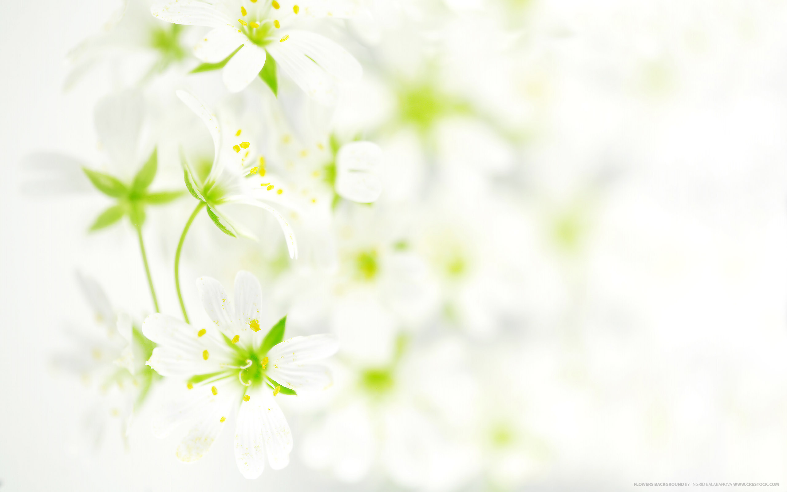 Flowers background wallpaper | 2560x1600 | #30119