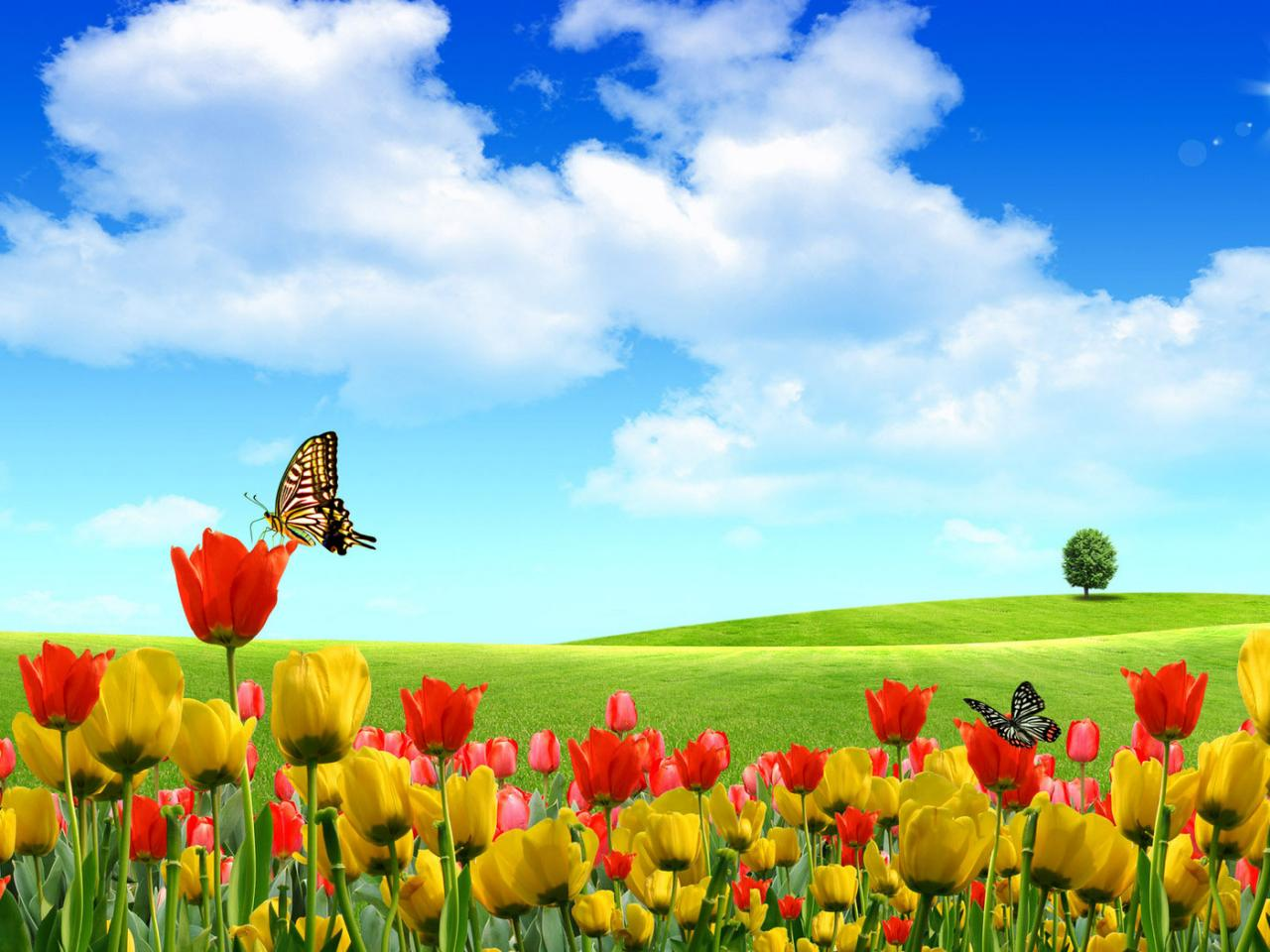 Beautiful flowers landscape wallpaper 1280x960 For 17-inch wallpaper download,background image,wallpaper and Online Stock Photo Images