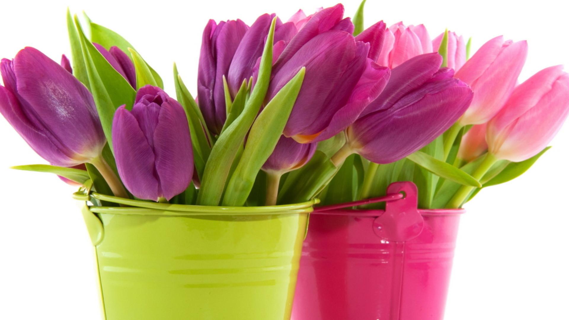 Flowers Purple Tulip Vase
