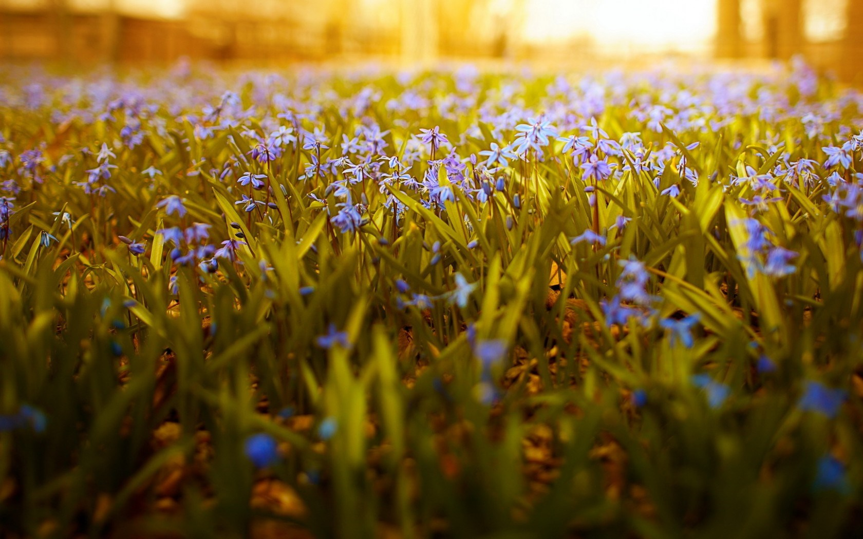 Flowers Sunlight Nature