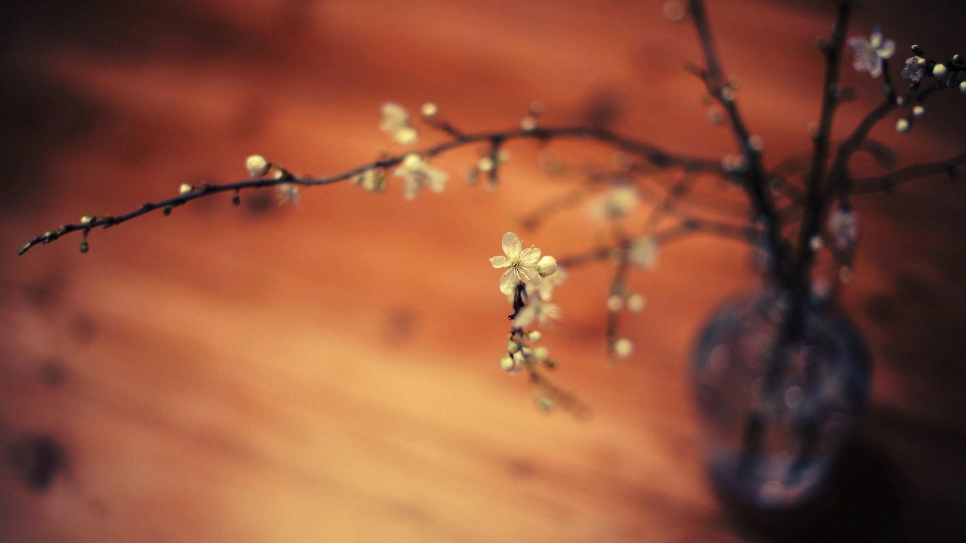 Vase Branches Flowers Macro