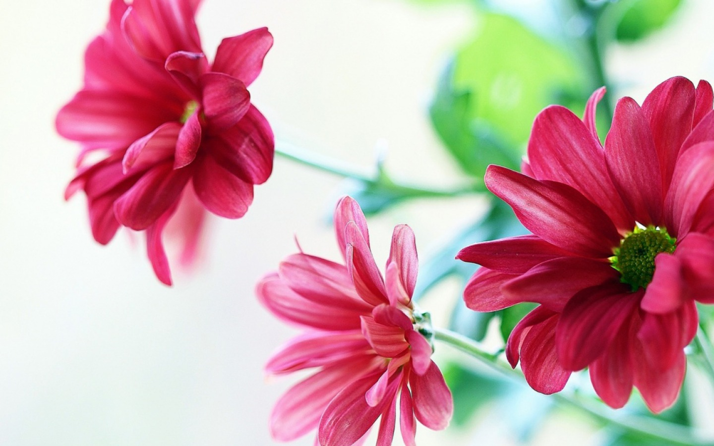 Flowers Wallpaper 48 Thumb