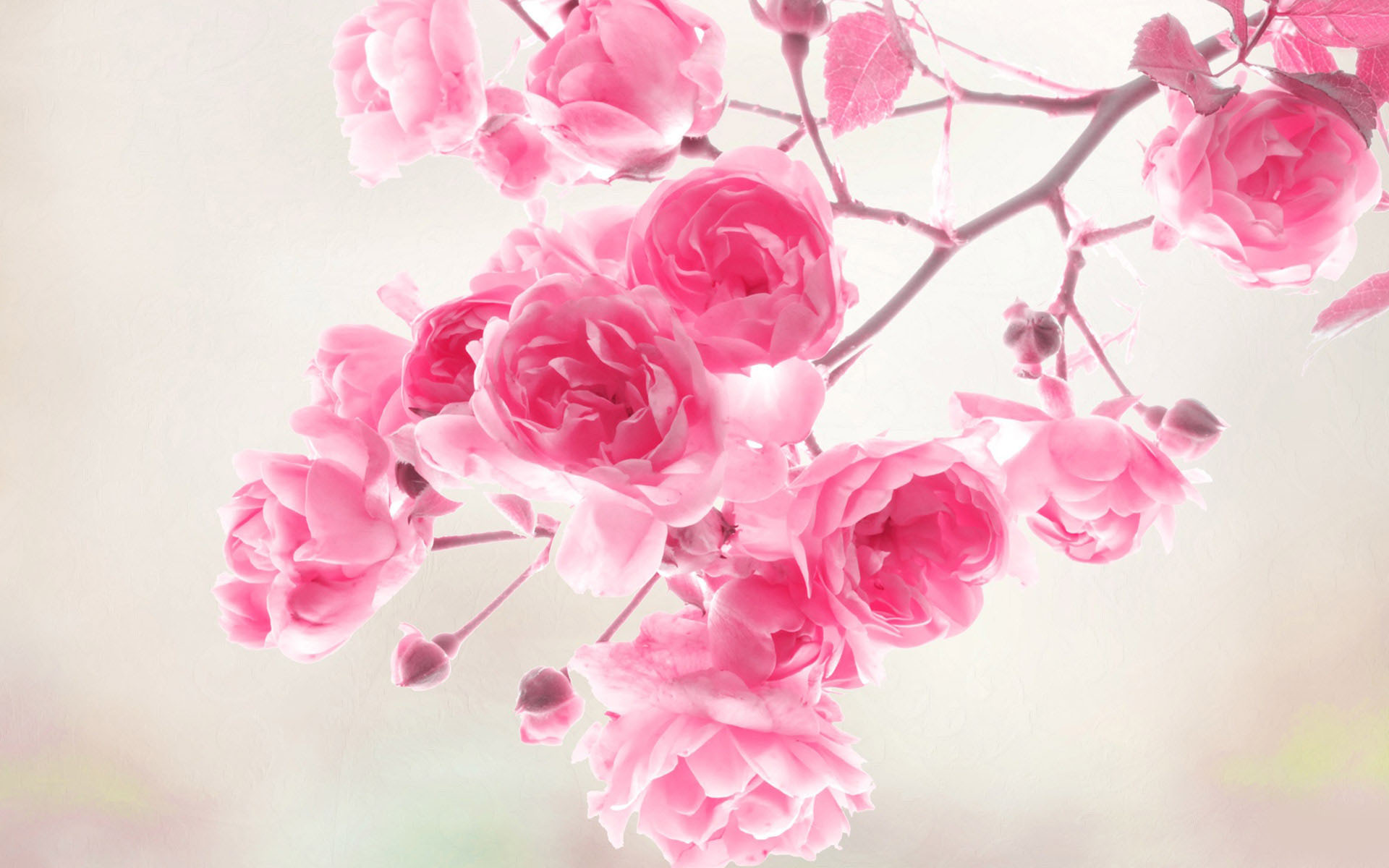 Flowers Wallpaper