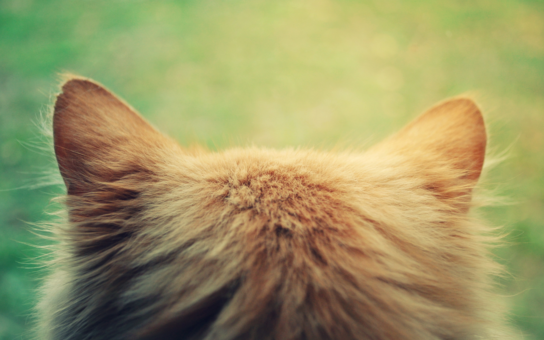 Fluffy cat head